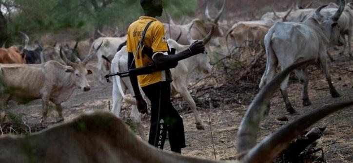 suspected herdsmen