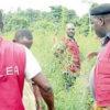 cannabis plantation NDLEA officials