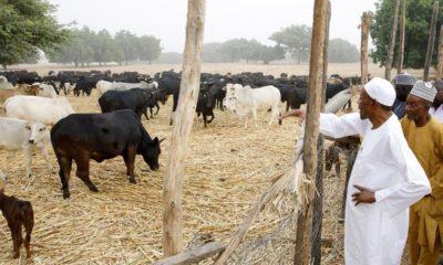 buhari on farm