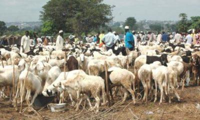 cattle breeders