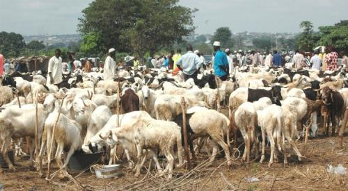 cattle breeders