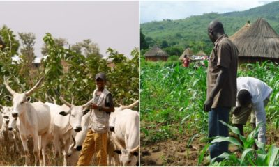 Farmers and herders,