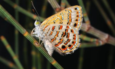 26 butterfly species at great risk of extinction – Study