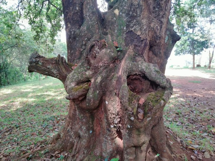 Tree with sexual organs