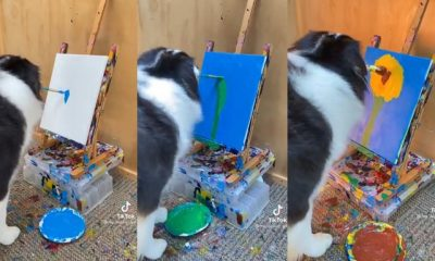 VIDEO: Dog effortlessly shows artistic skills as it paints on canvas